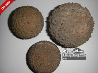 سنگهای فسیل جانوری ( خارپوستان )  ایران