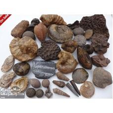 کلکسیون زیبا و نادر از سنگهای فسیل طبیعی ایران 1